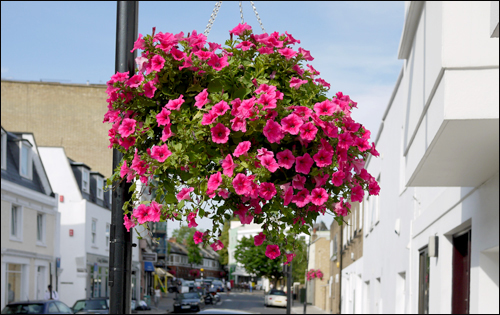 Flowers in Belsize Village
